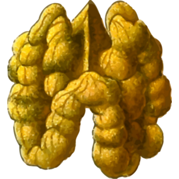 Walnut seed