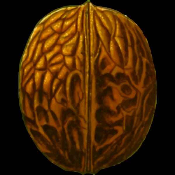 Brown nut
