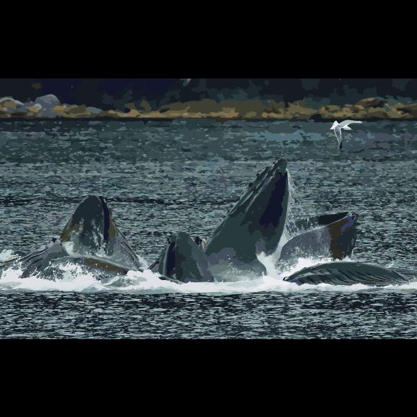 Whales Bubble Net Feeding edit1 2016052930