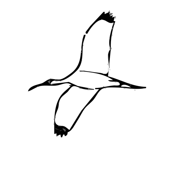 Wood Ibis bird vector image