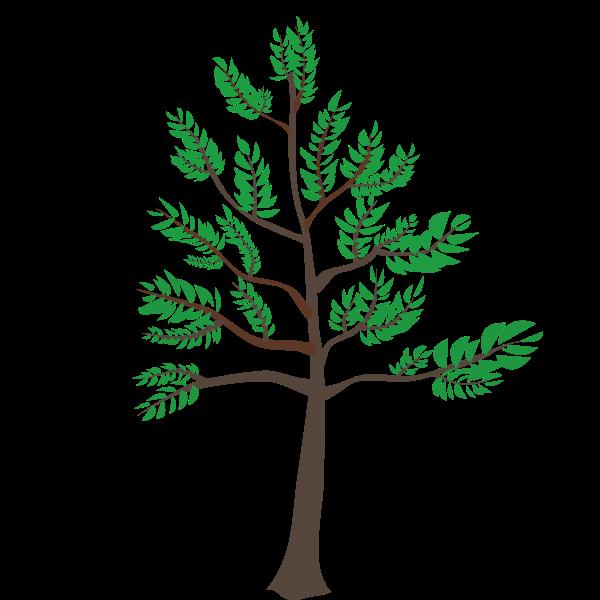 Young cedar tree illustration