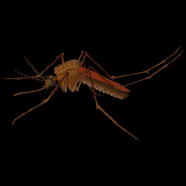Zika virus symbol