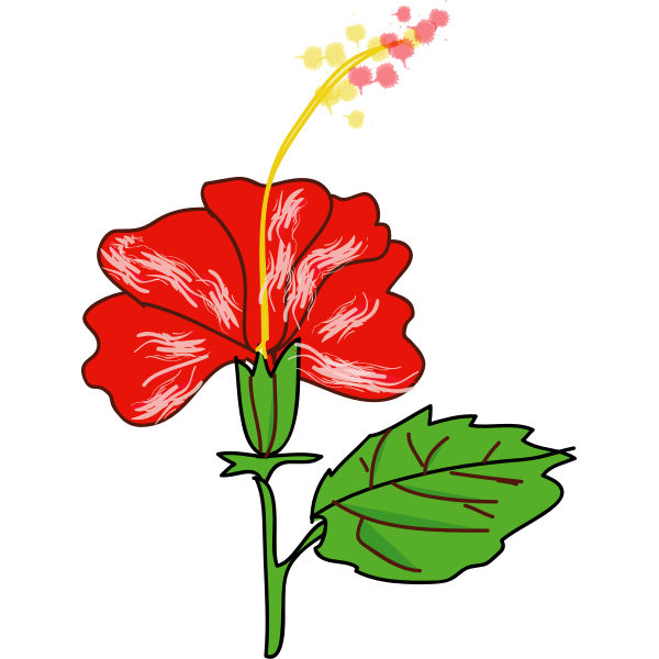 Flower Hibiscus