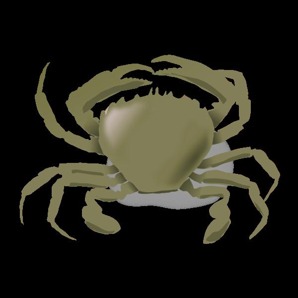 Vector drawing of crab