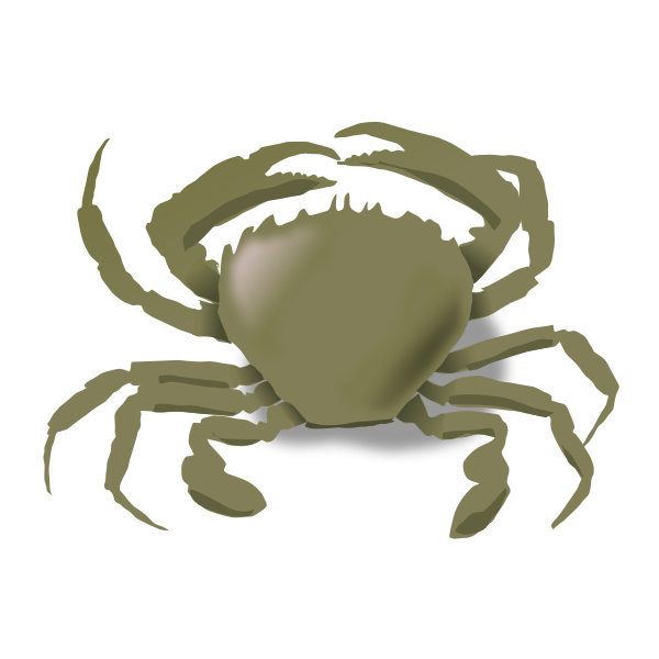 Vector drawing of crab
