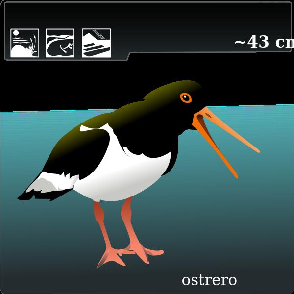 ostrero