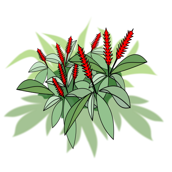 Plant with red flowers