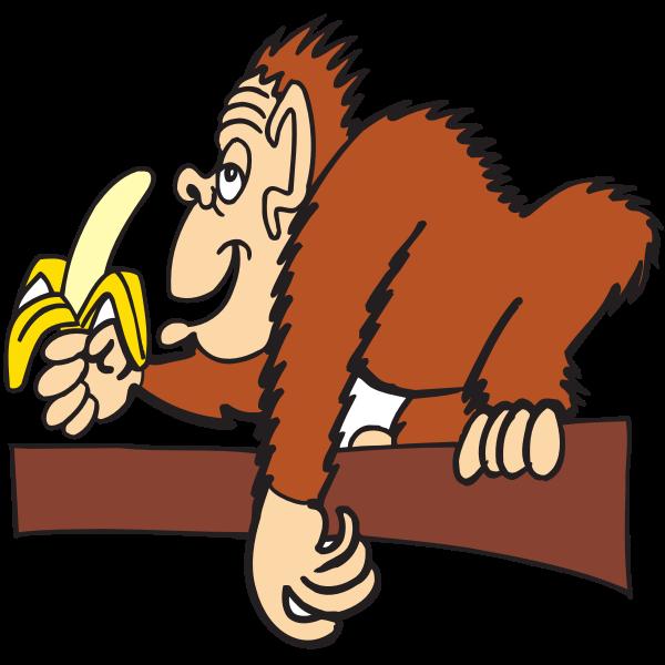 Ape eating banana