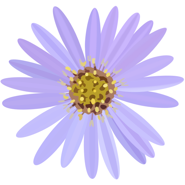 Aster-1574064050
