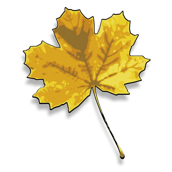 Photorealistic yellow maple leaf vector image