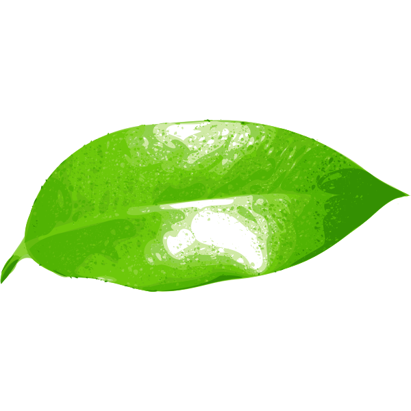 Realistic green leaf