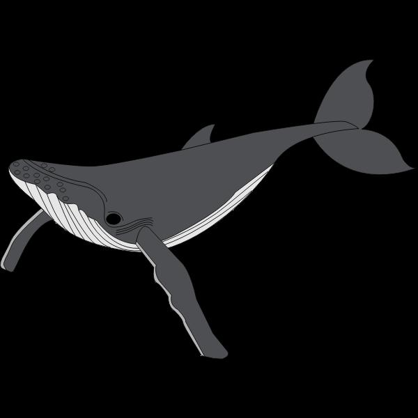 Sea's biggest mammal cartoon image