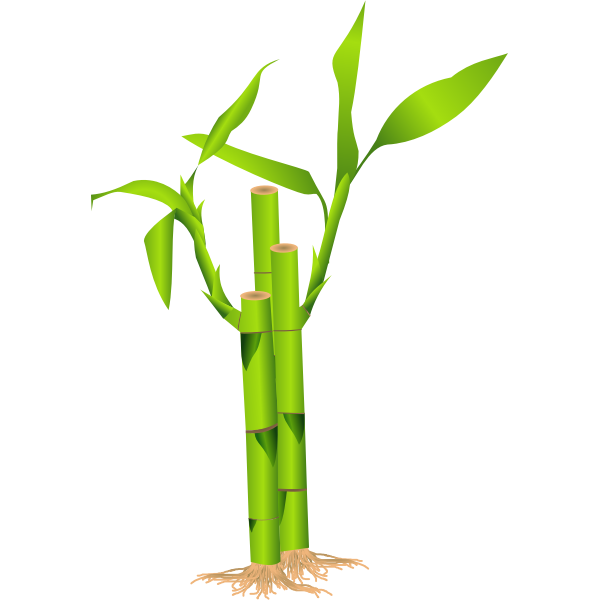 Closeup of bamboo stalk vector illustration