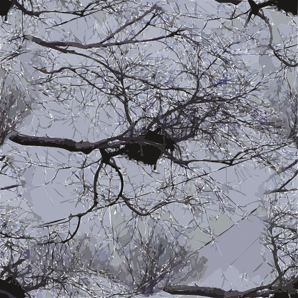 Image of bird nest on tree branches with power lines above