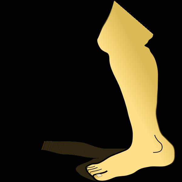 Human leg vector image
