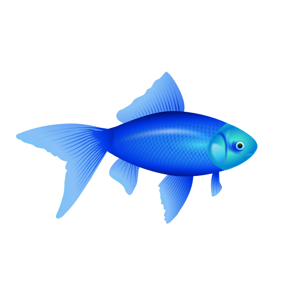 Vector illustration of blue goldfish