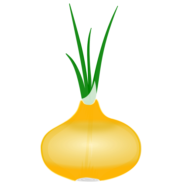 Onion with its leaves vector clip art