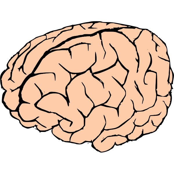 Vector drawing of human brain in pink and black