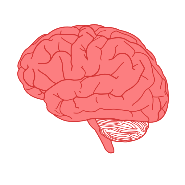 Vector Drawing Of Side View Of Human Brain In Red Free Svg