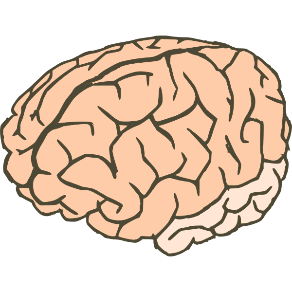 Vector clip art of human brain in 2 colors