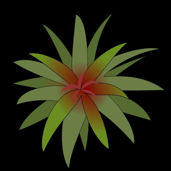 Bromelia leaves