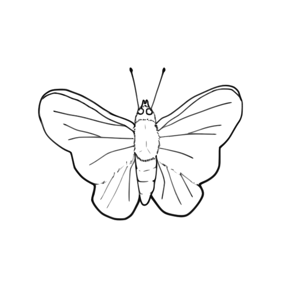 Butterfly line art vector image