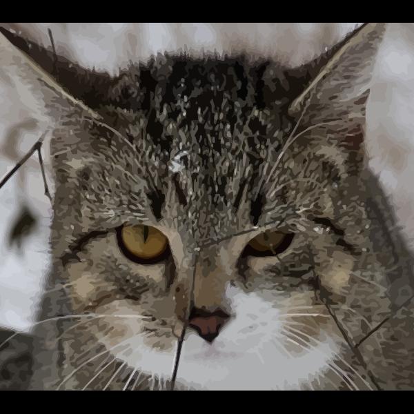 Cat's face vector illustration