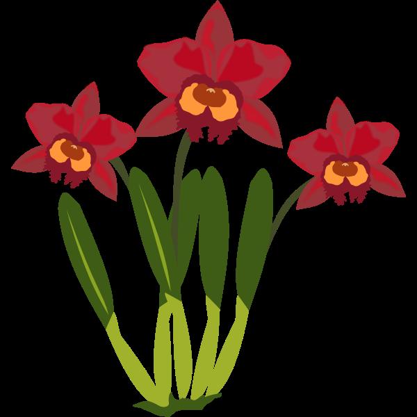 Cattleya flower color illustration