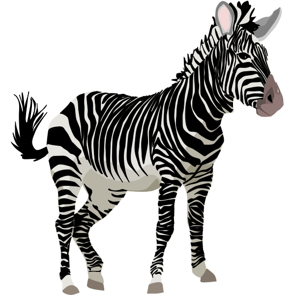 Vector graphics of color zebra animal