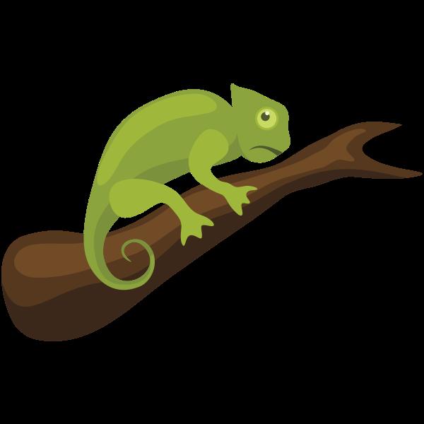 Chameleon reptile