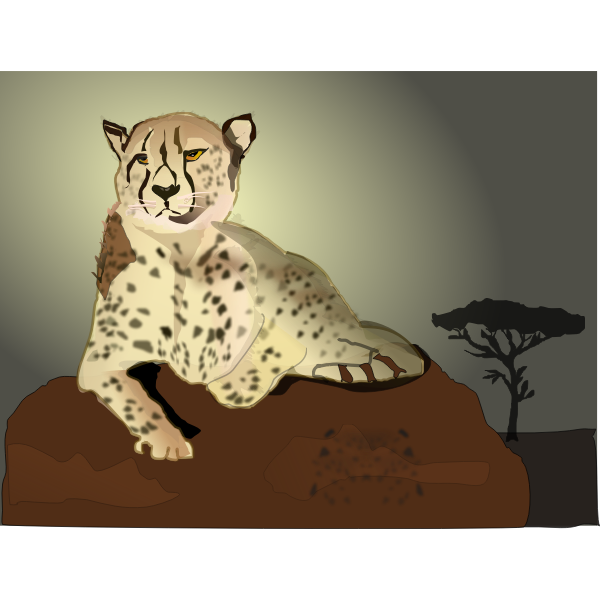 Cheetah lying on rock vector image
