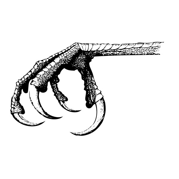 Bird claw