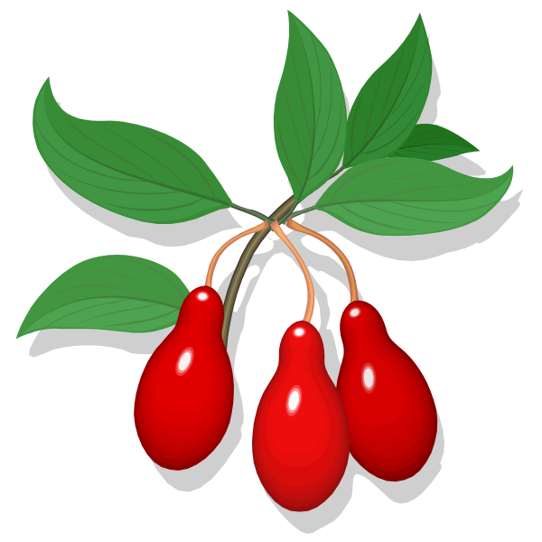 Cling fruit