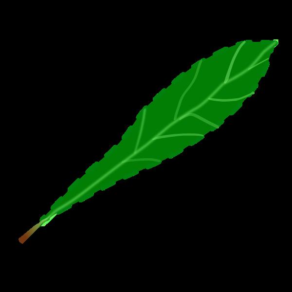 Leaf petal