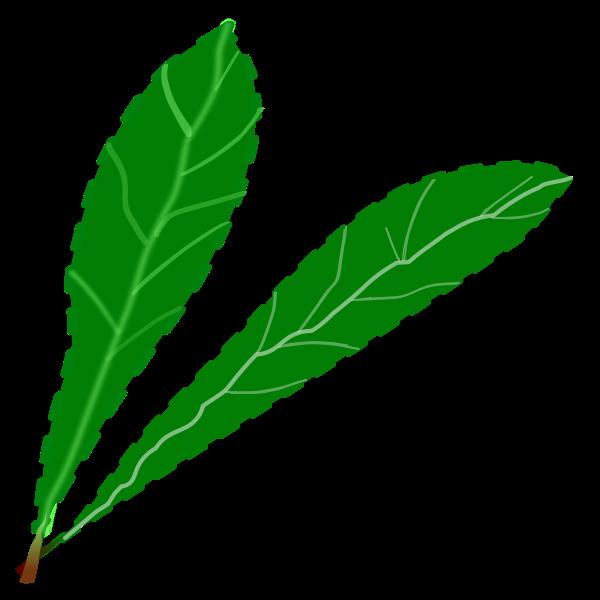 Green leaves pair