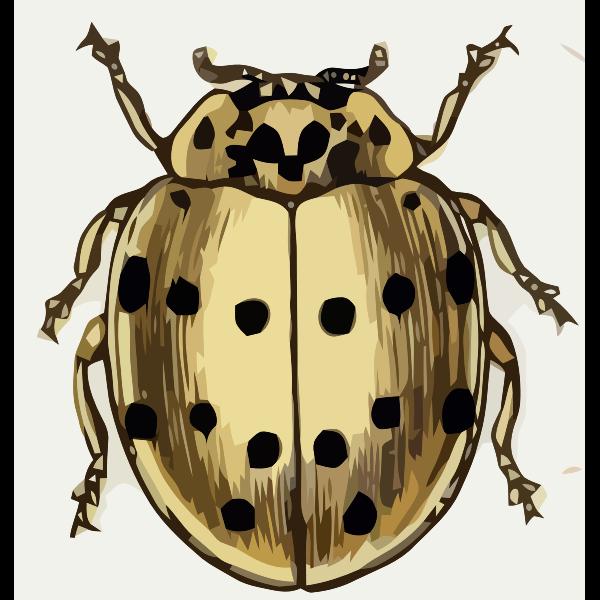 Coccinella sedicimpunctata
