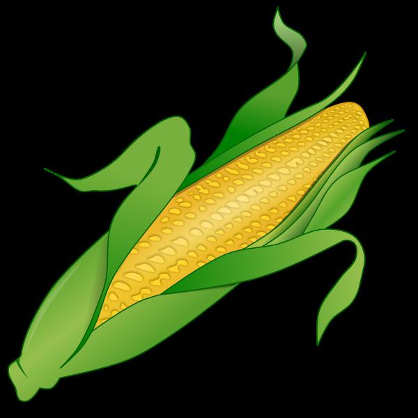 Fresh corn image