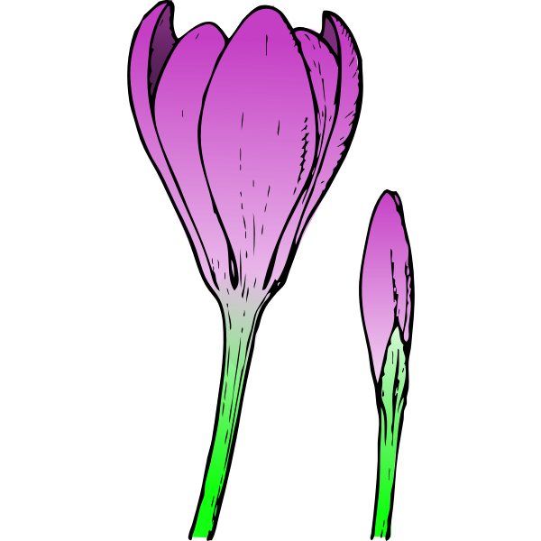 Colored crocus