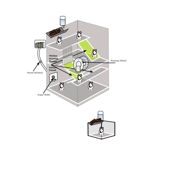 Vector graphics of mouse experiment trap