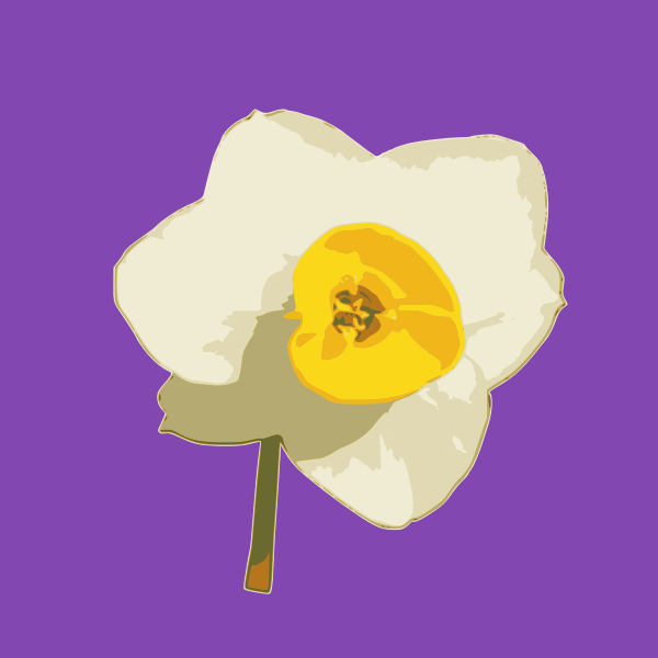 daffodil 03