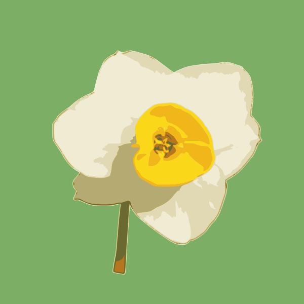 daffodil 04