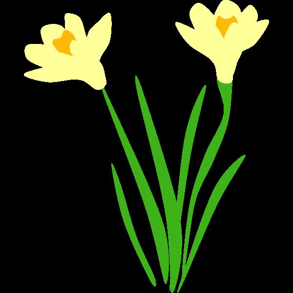 dafodils for gravesite