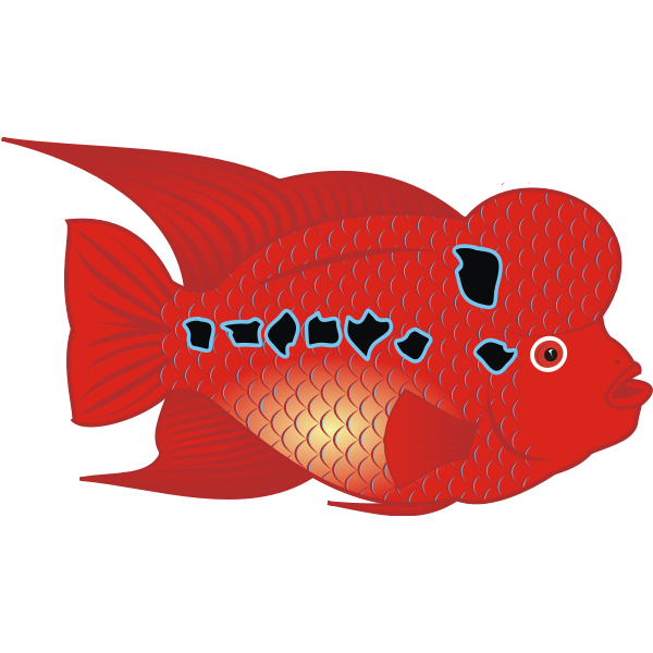 Flowerhorn Fish Vector