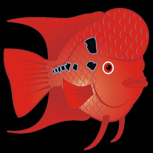 Flowerhorn Fish  Vector Image