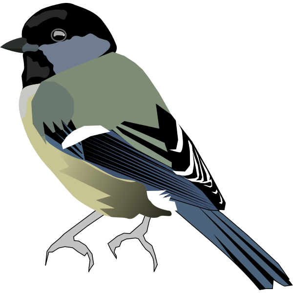 Vector image of colored bird with gray front