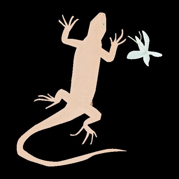 Gecko reptile silhouette