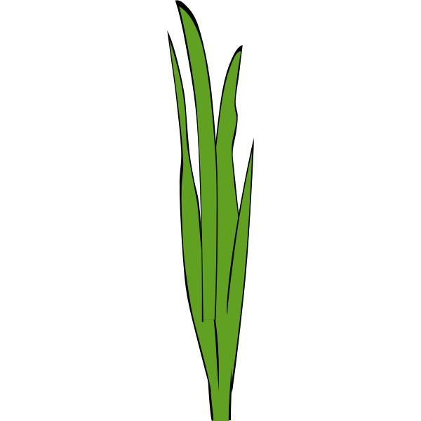 Grass blades and clumps
