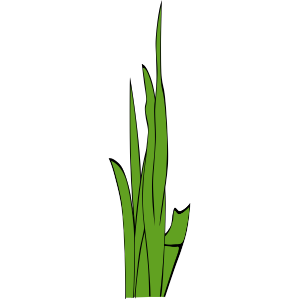 Leaves of grass vector illustration