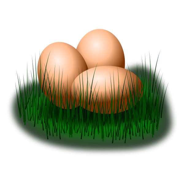 Eggs in grass vector image