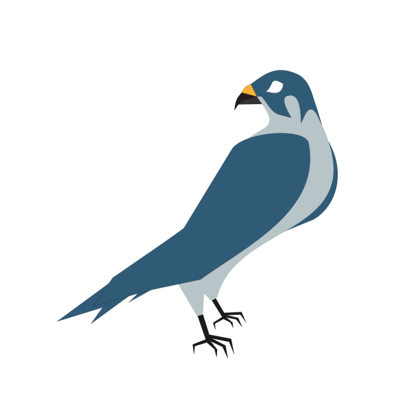 Vector image of a hawk